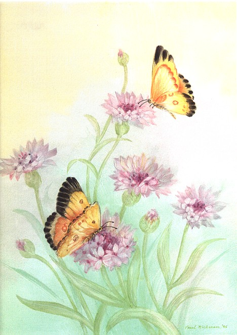 Butterflies on Porcelain on Steel Plak<br>Painted by Pearl Nickerson